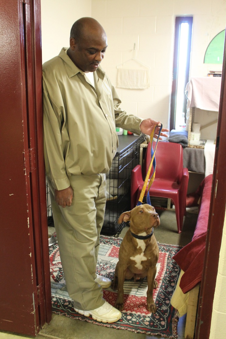 This young Vizsla mix has been in the Camp K-9 program for only a month and a half. Her handler Roy Woods shows visitors that she's so well-behaved, he only need hold her leash with two fingers.