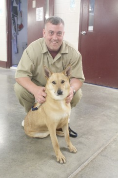 Canaan mix Bree has been transformed from an anxious dog to a gentle lady ready for the companionship of a family after only five weeks with inmate Jason Lloyd.